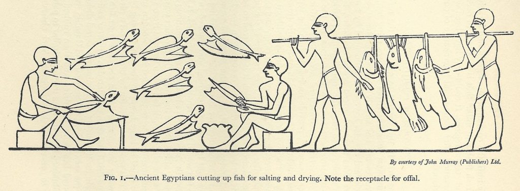 Drawing of ancient Egyptian fish salting